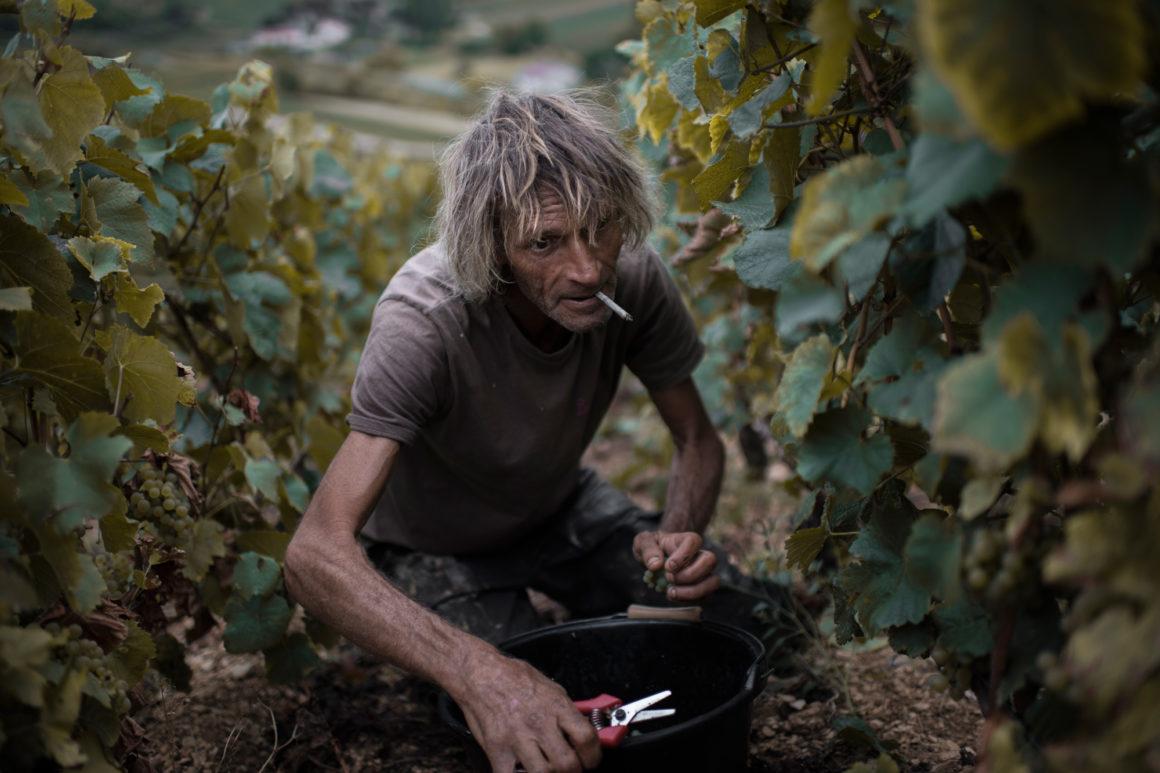 Vin wine bourgogne
